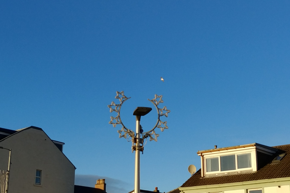 A seagull soaring above a festive illumination in early December