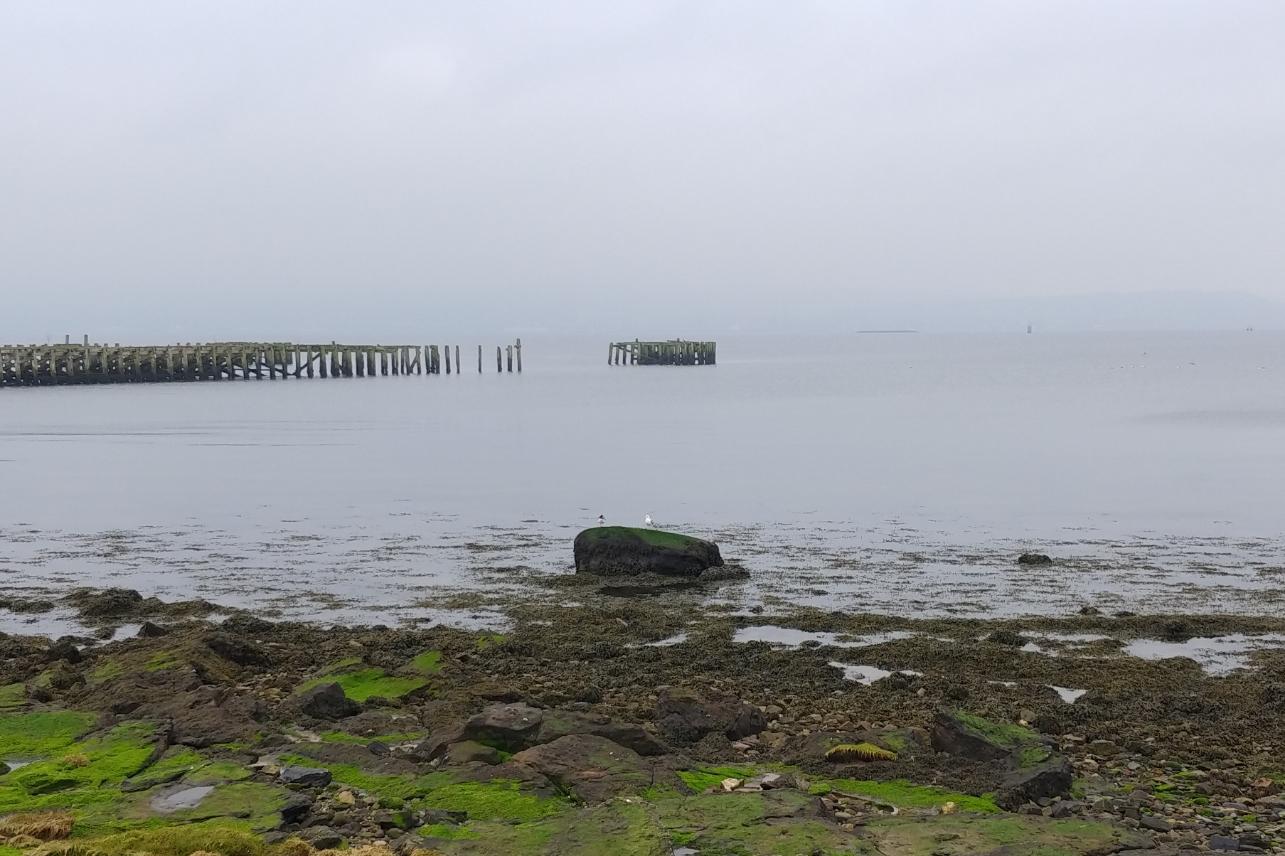 A seagull perched on a rock at Craigendoran bay