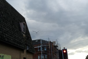 Seagull terrorist swoops from the Co-op roof