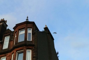 Seagull of the month for August 2019