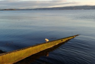 A seagull sitting on a groyne in the autumn evening sunshine.