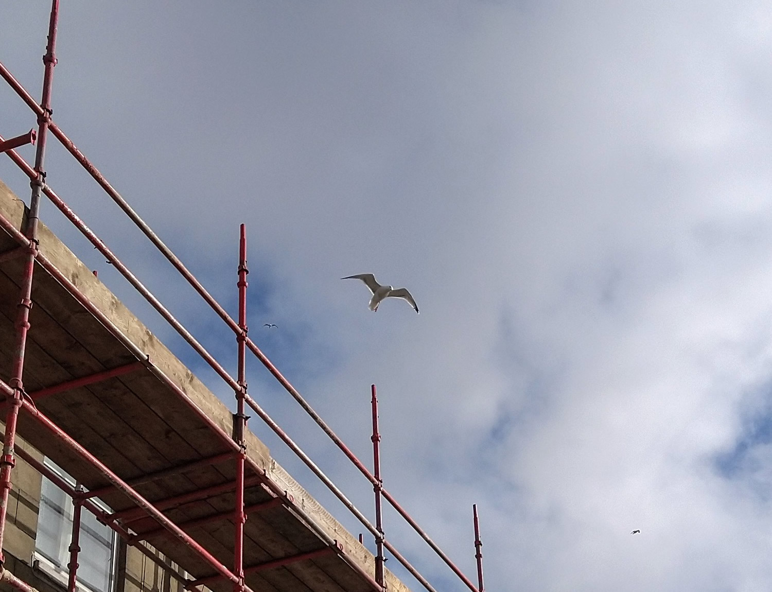 A seagull above some scaffolding on East Clyde Street