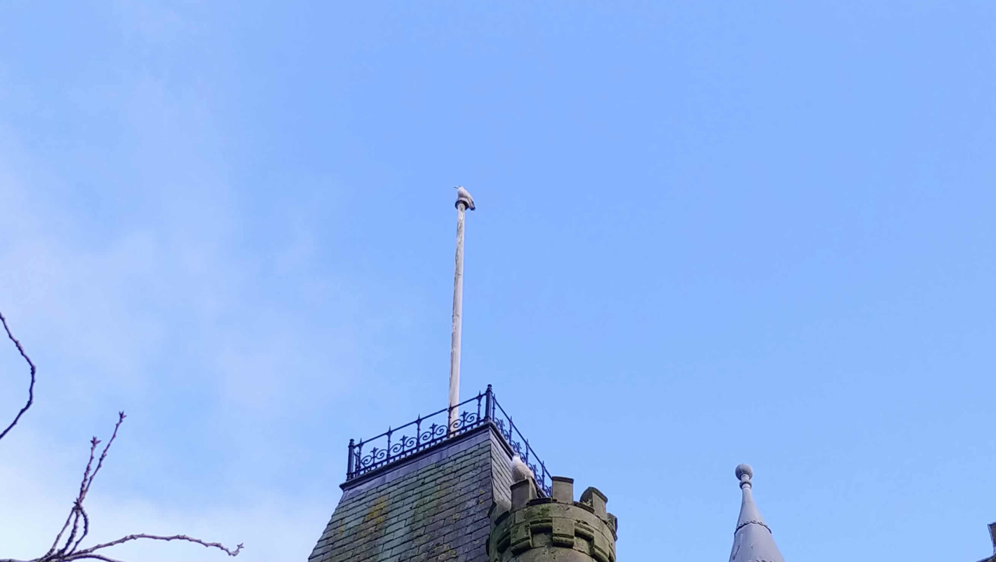 A seagull perched on the flagpole on top of the Victoria Halls