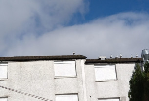 A seagull practising social distancing in Churchill, Helensburgh