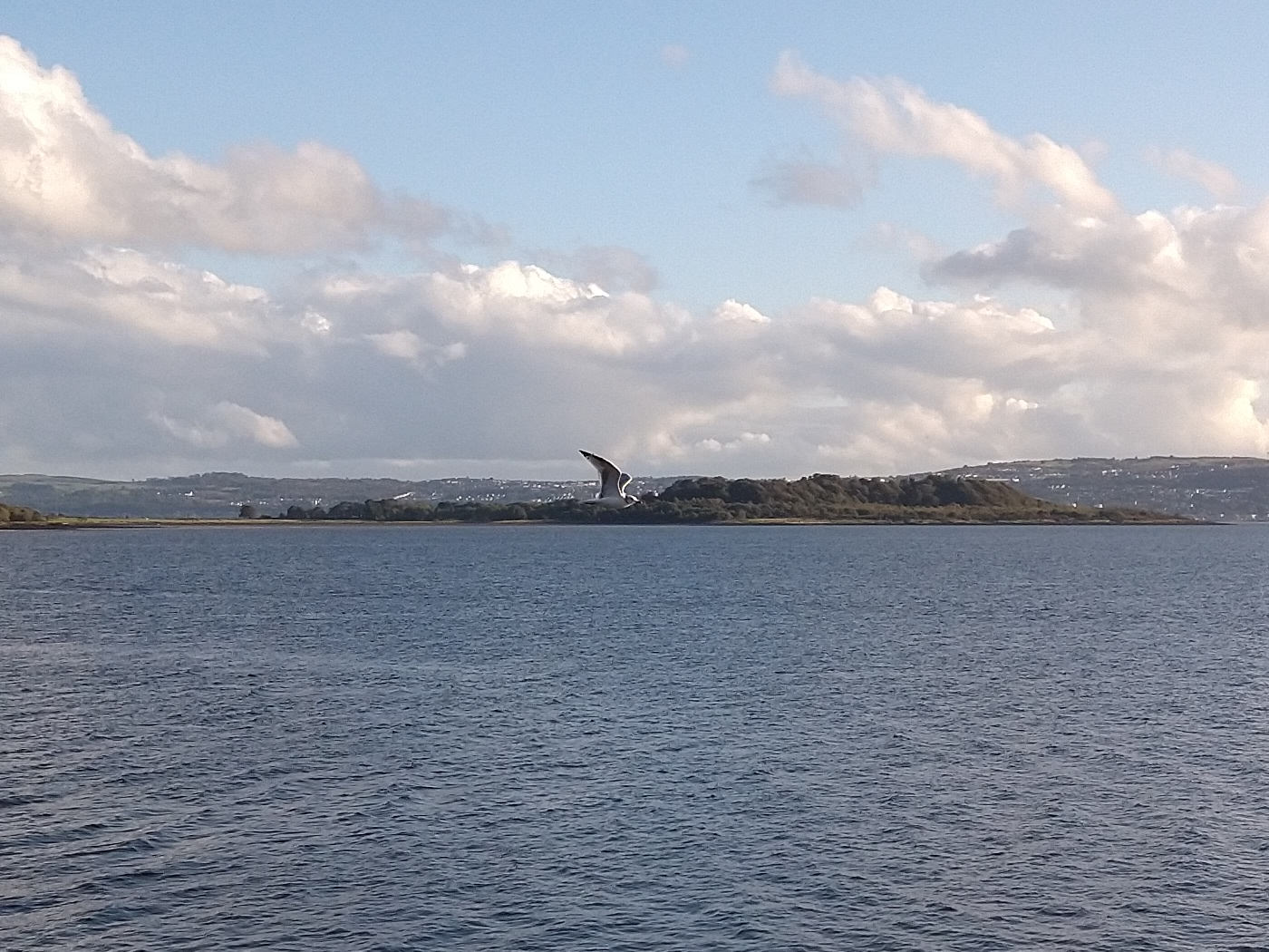 A seagull soaring above the Clyde by Craigendoran Pier with Ardmore Point in the background