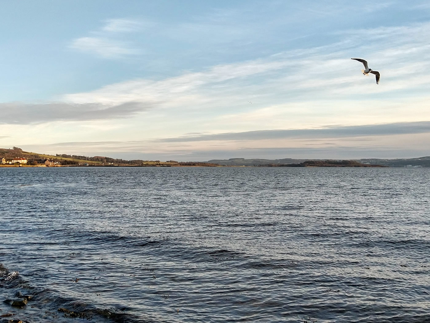 A seagull gliding in the breeze above the foreshore at the civic centre in Helensburgh