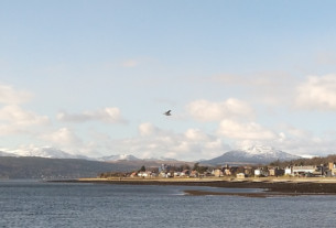 A seagull soaring above the west bay, snowcapped mountains in the background
