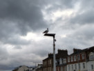 A seagull perched on a lamppost under a threatening sky by the riverside in Helensburgh