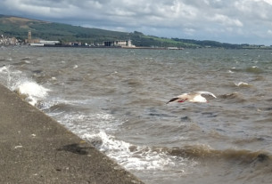 A seagull launches from the seawall into a bracing headwind